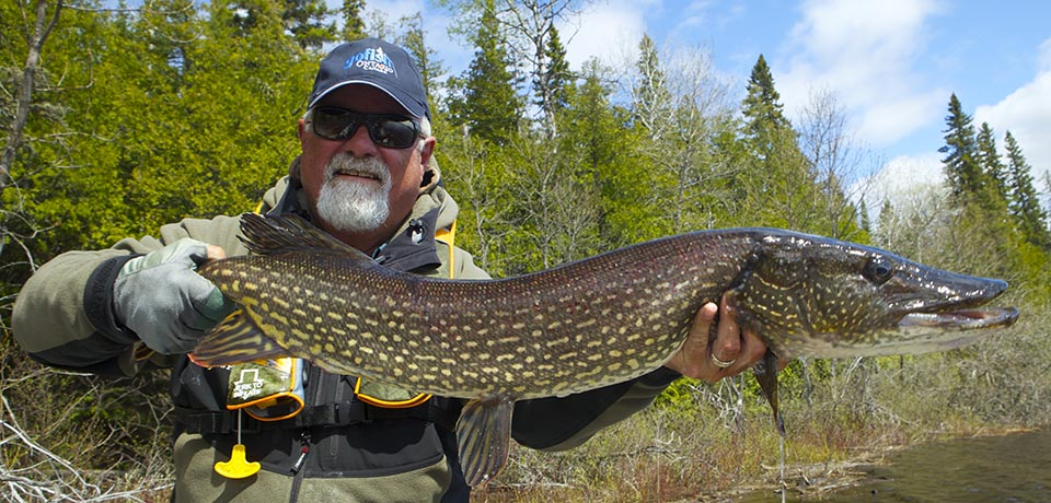 Ontario Fly Records-Brook Trout